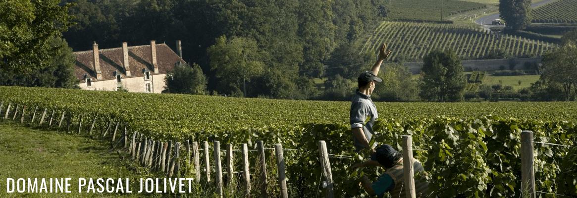 Le Domaine Pascal Jolivet, grands vins de Sancerre et de Pouilly-Fumé