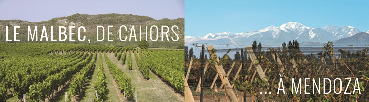 Le cépage Malbec à Cahors et en Argentine