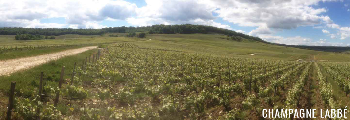 Champagne Labbé & Fils à Chamery dans la Montagne de Reims