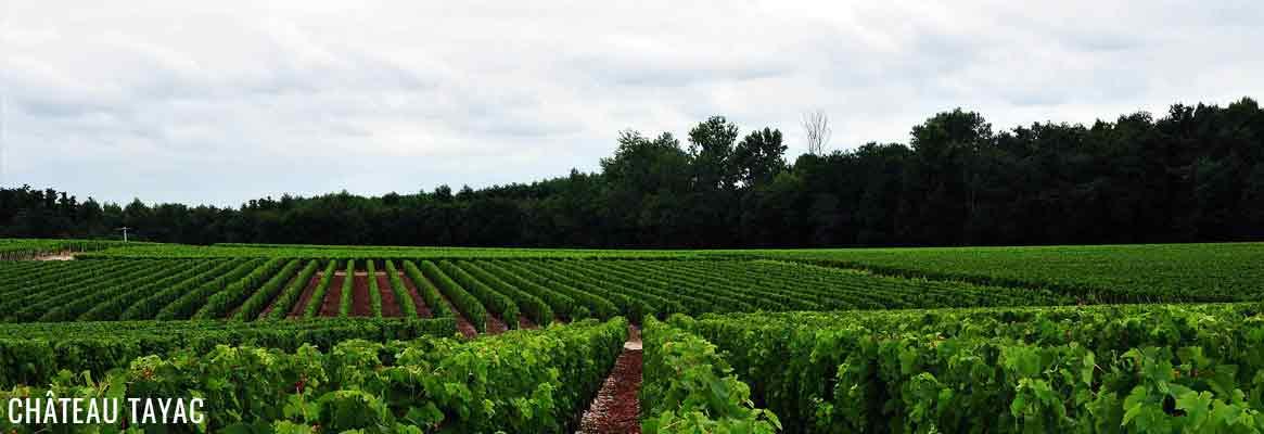 Château Tayac, vins de Bordeaux en appellation Margaux