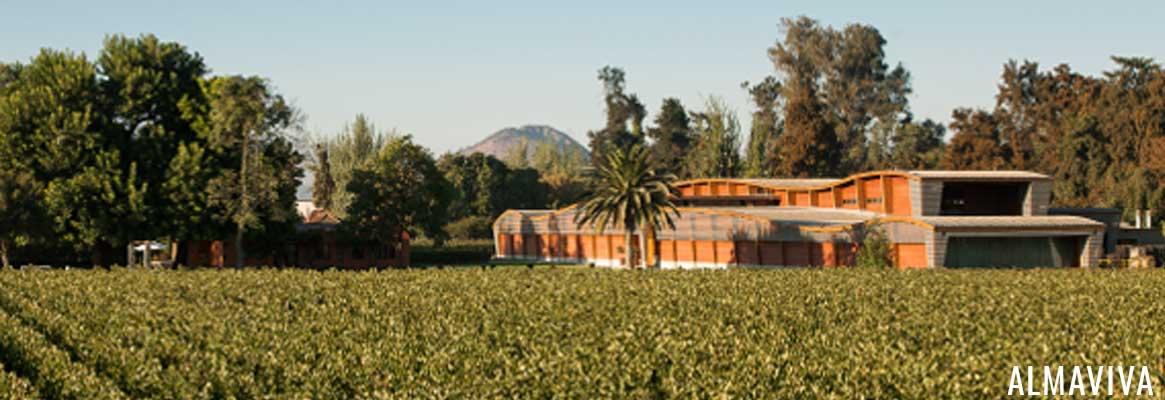 Almaviva, vins chiliens d'exception dans la Valle del Maipo