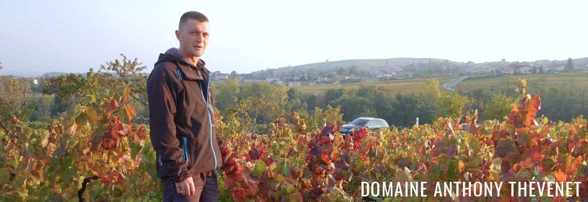 Anthony Thévenet, grands vins de Morgon et Chénas