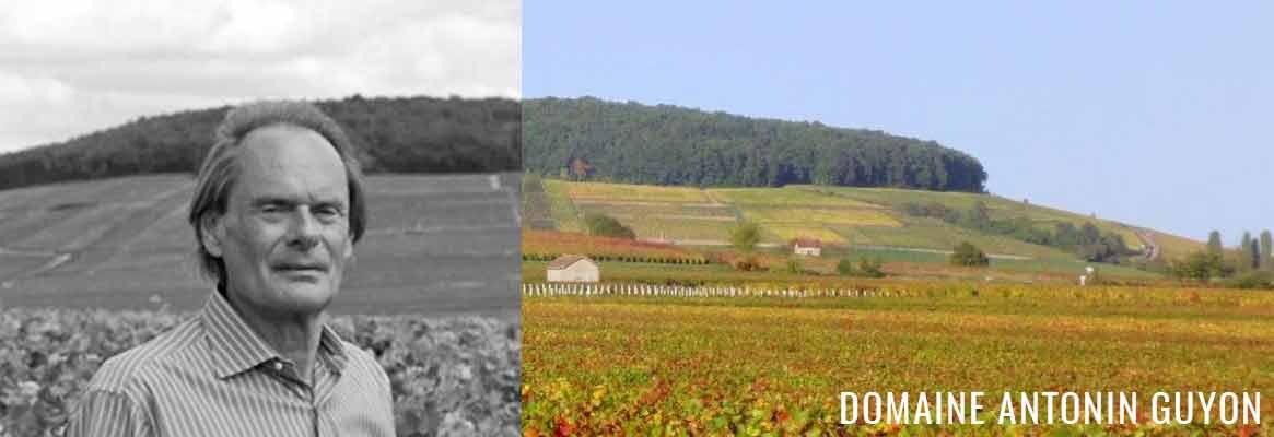 Domaine Antonin Guyon, grands vins de Puligny-Montrachet, Meursault et Corton Charlemagne