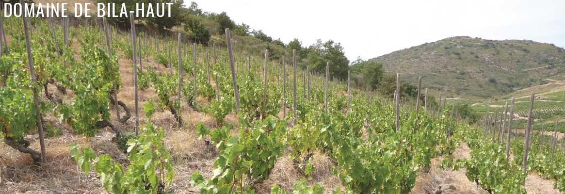Domaine de Bila-Haut, grands vins du Roussillon