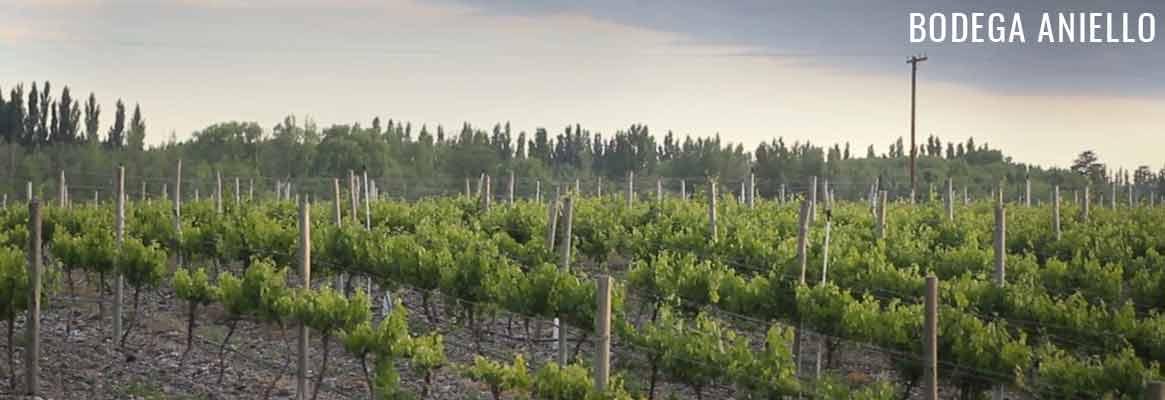 Bodega Aniello, vins argentins de Patagonie
