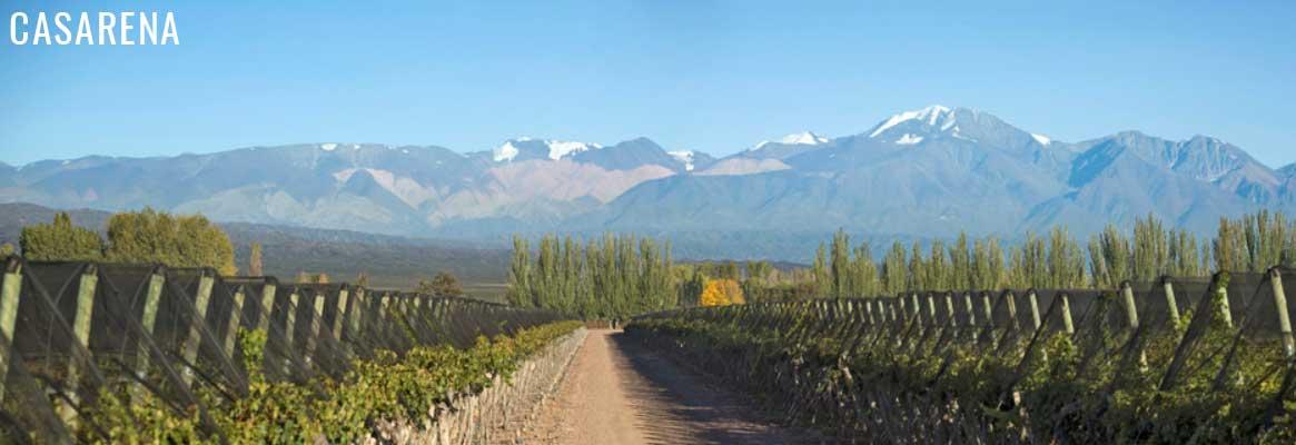 Casarena, vins argentins de Mendoza