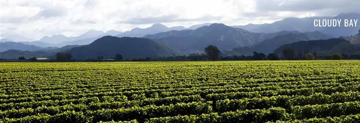 Cloudy Bay, vins de Nouvelle-Zélande