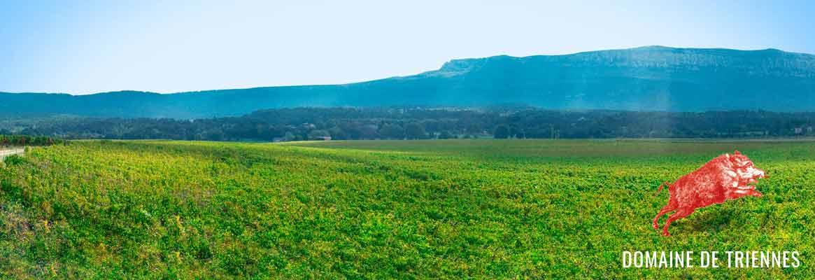 Triennes, vins de Provence, Coteaux du var