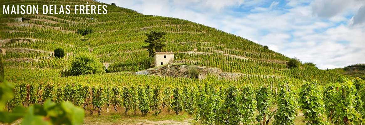 Maison Delas Frères, grands vins du Rhône, Hermitage, Crozes-Hermitage et Saint-Joseph
