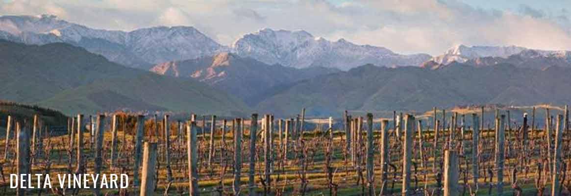 Delta Vineyard, pinot noir de Nouvelle-Zélande
