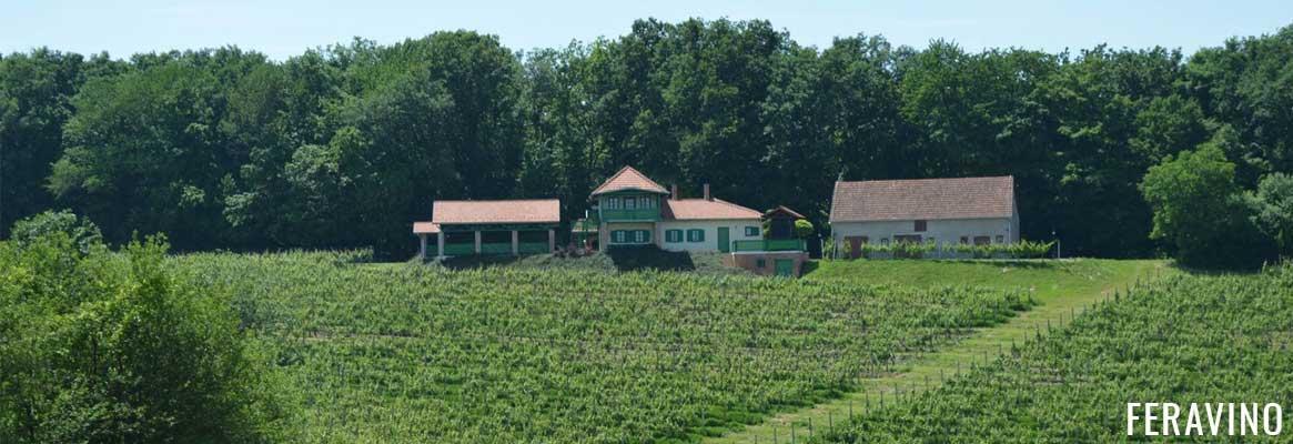 Domaine Feravino, grands vins de Croatie