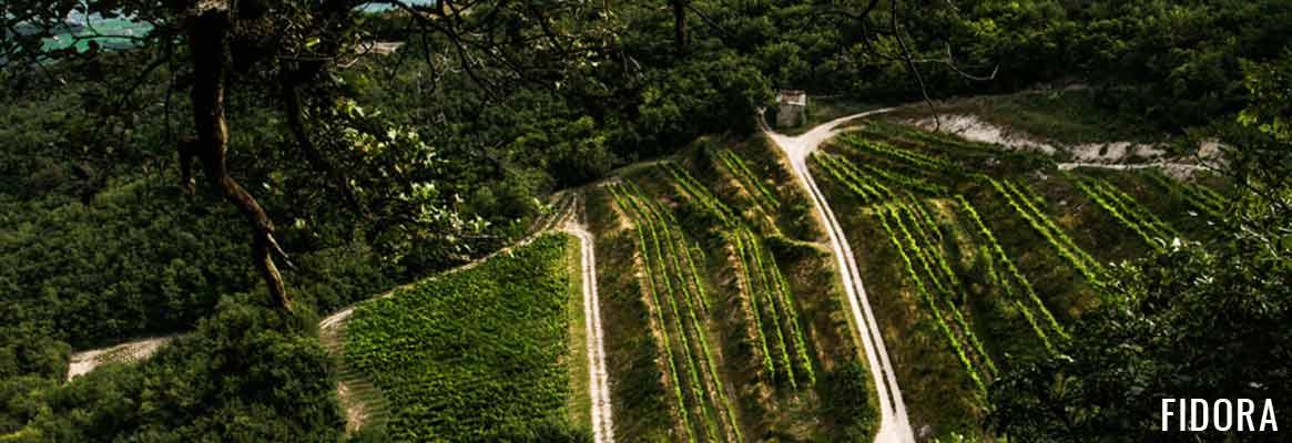 Fidora, grands vins italiens en DOC Valpolicella