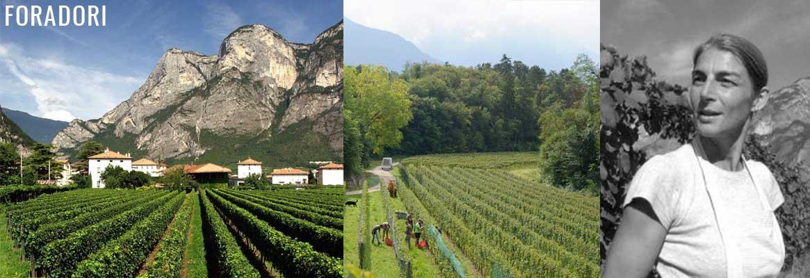 Foradori, grands vins italiens des Dolomites