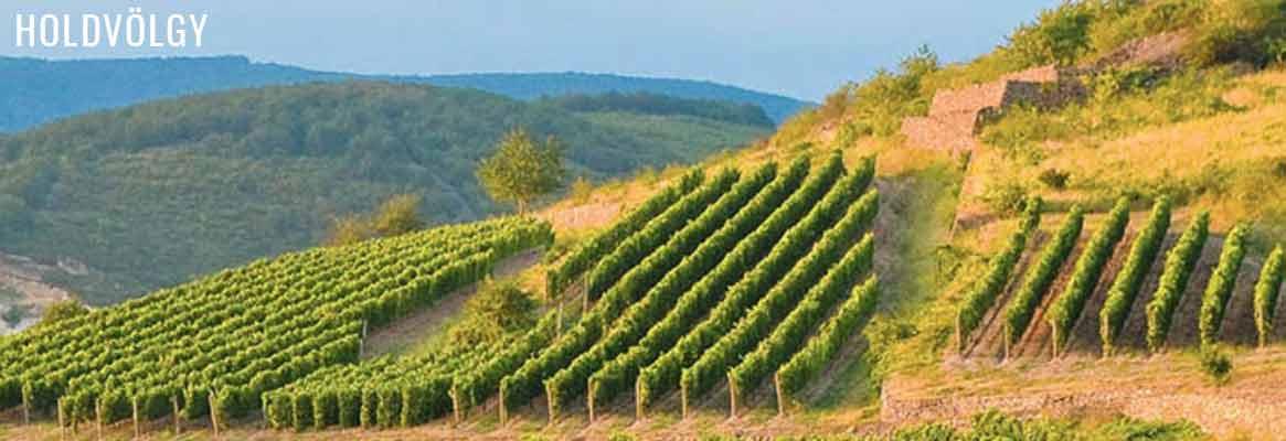 Holdvölgy, grands vins blancs de Tokai, vins de Hongrie