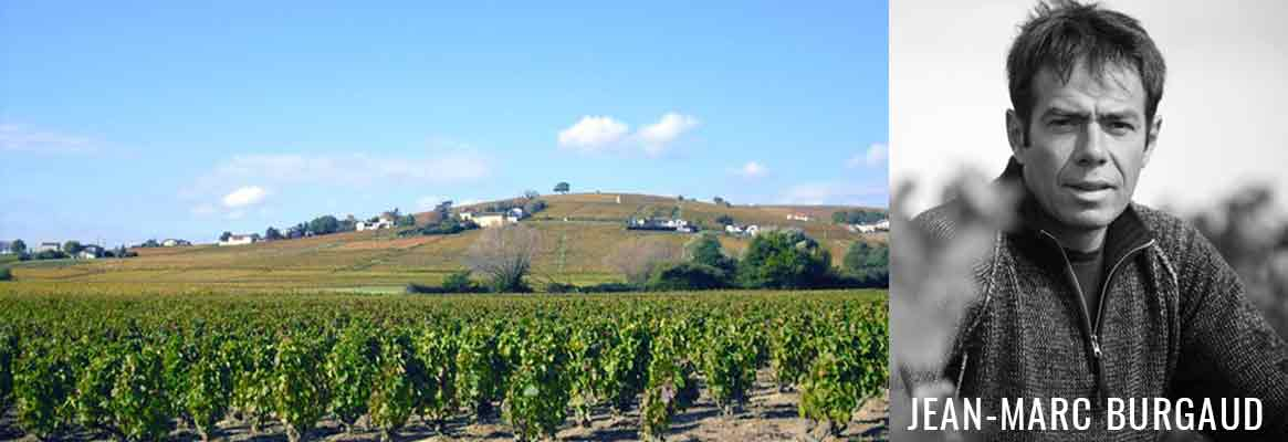 Jean-Marc Burgaud, grands vins de Morgon et du Beaujolais