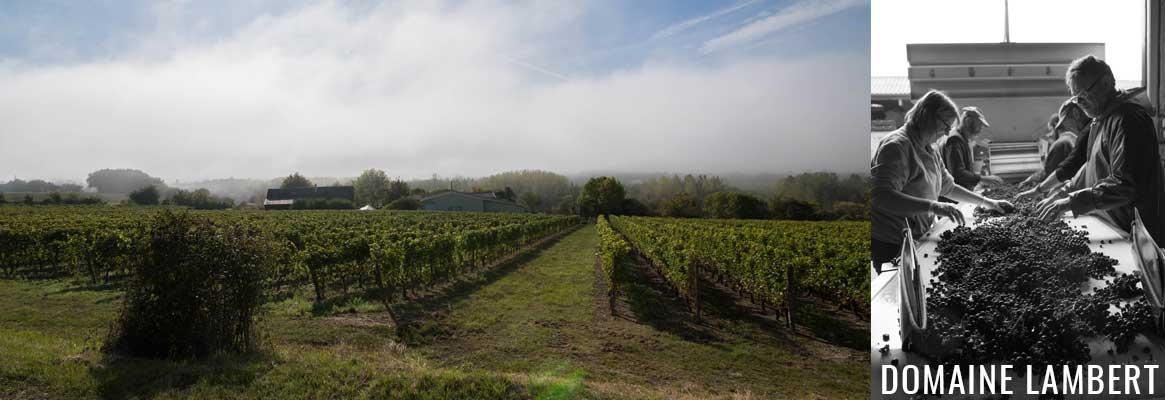 Domaine Lambert, grands vins de Chinon BIO et biodynamie