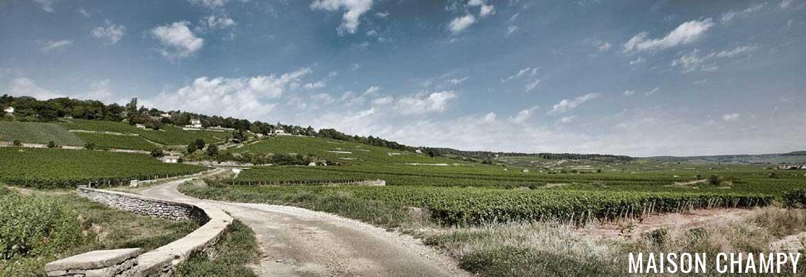 Maison Champy, grands vins de la Côte de Beaune