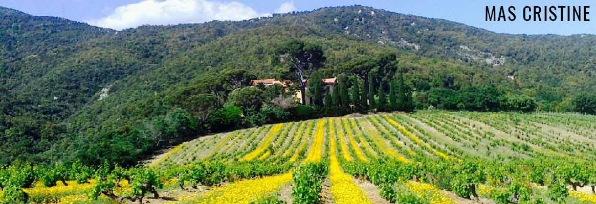 Mas Cristine, grands vins du Roussillon