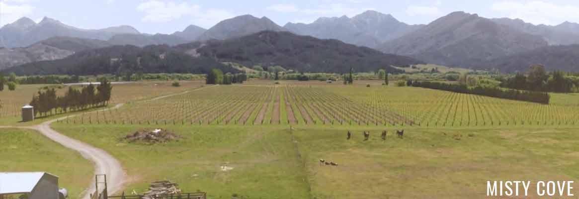 Misty Cove, vins de Nouvelle-Zélande
