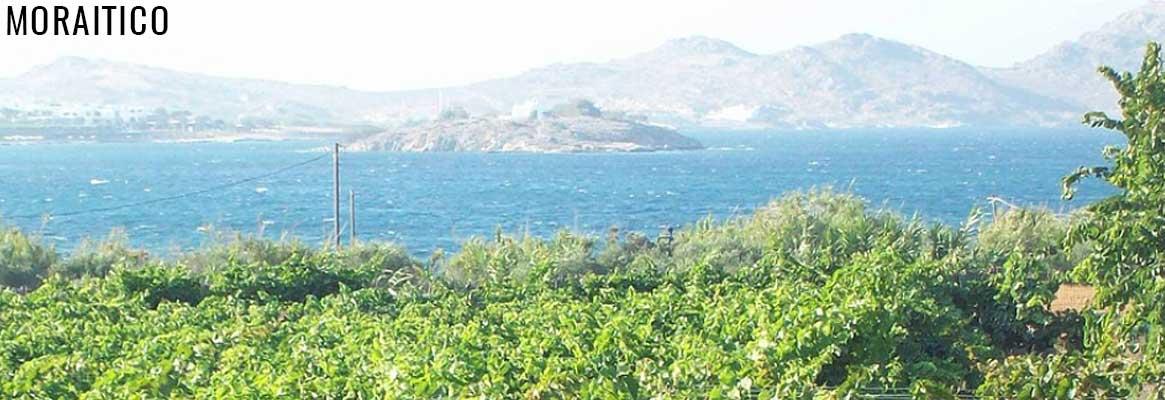 Domaine Moratico, vins grecs biologiques des Cyclades