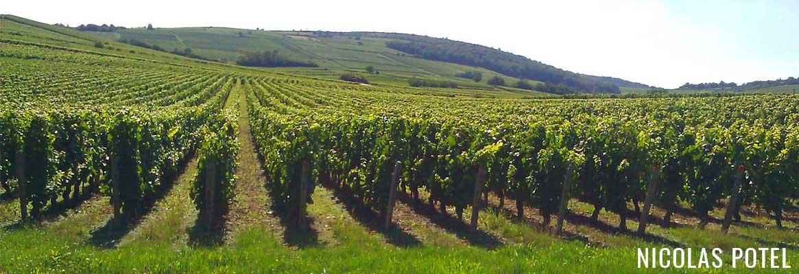 Domaine Nicolas Potel, grands vins de Bourgogne