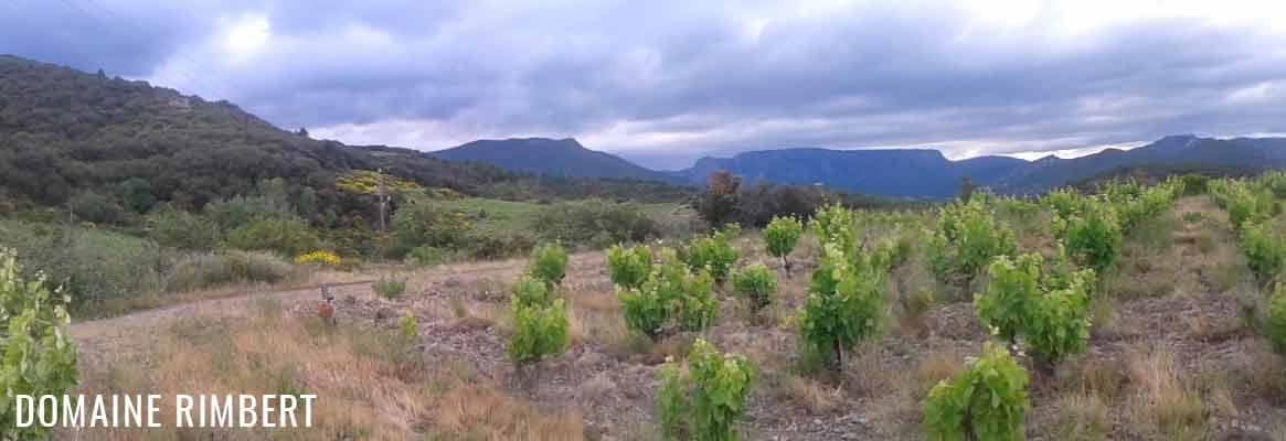 Domaine Rimbert, vins de Saint-Chinian
