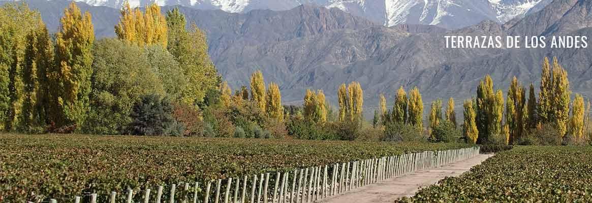 Terrazas de los Andes, grands vins argentins