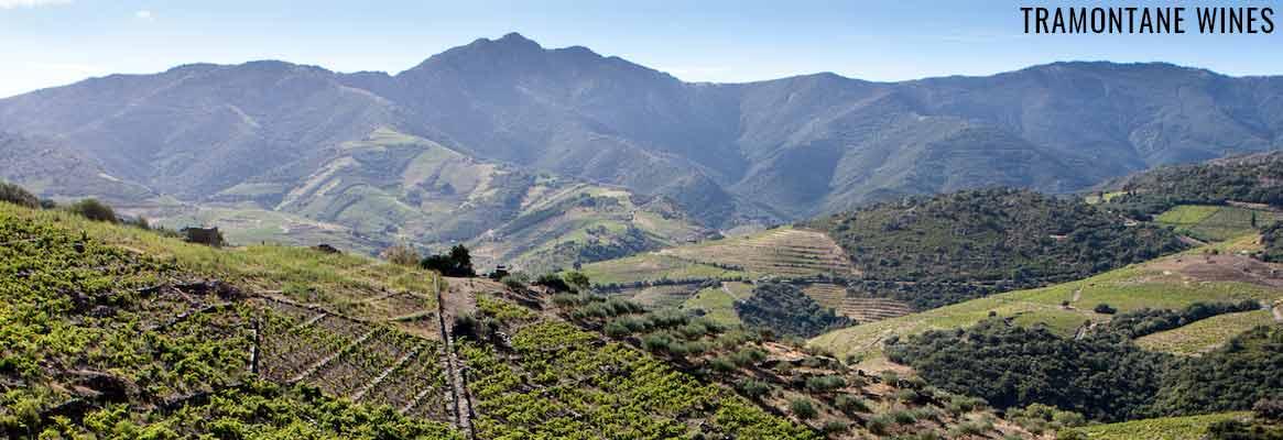 Tramontane Wines, grands vins du Roussillon